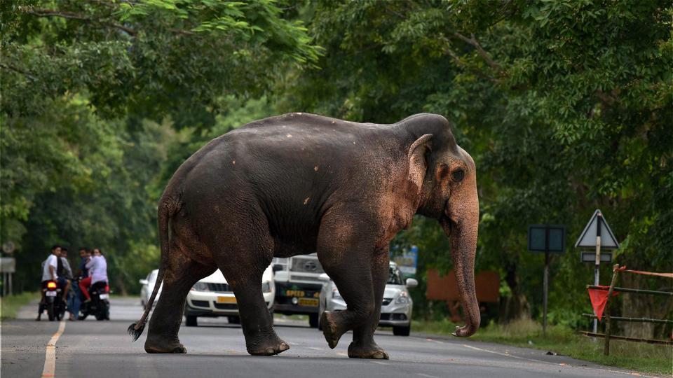 Uttarakhand News,elephants,forest