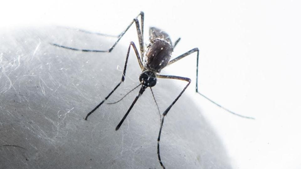NCP member and former standing committee chairman Ashwini Kadam blamed that there are many cases in the Sahakarnagar area and despite constant remainders, the administration was not spraying any kind of mosquito repellents in the area.