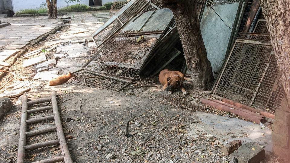 A visit to one of the oldest shelters, Society for Prevention of Cruelty to Animals (SPCA) revealed a non-functional hospital with no ambulances and only OPD facilities.
