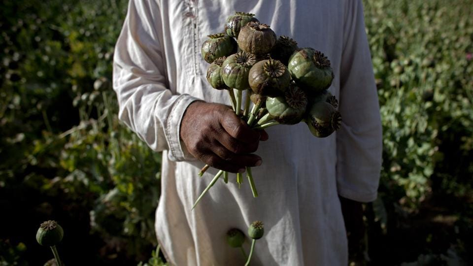 An Afghan holds a bouquet of poppies at a farm near the city of Kandahar on May 13, 2011. The Secure Livelihoods Research Consortium indicates that in 2015, about 1,500 hectares grew saffron, while 183,000 hectares grew poppy. Afghan farmers were using about 122 times the amount of land to grow the opium-producing plant. (Majid Saeedi / Getty Images)