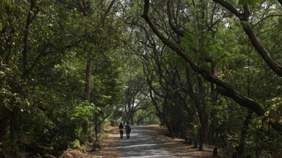 The alignment of the proposed link road, which is to pass through Sanjay Gandhi National Park (in pic) will provide direct connectivity to the eastern and western areas surrounding the national park.