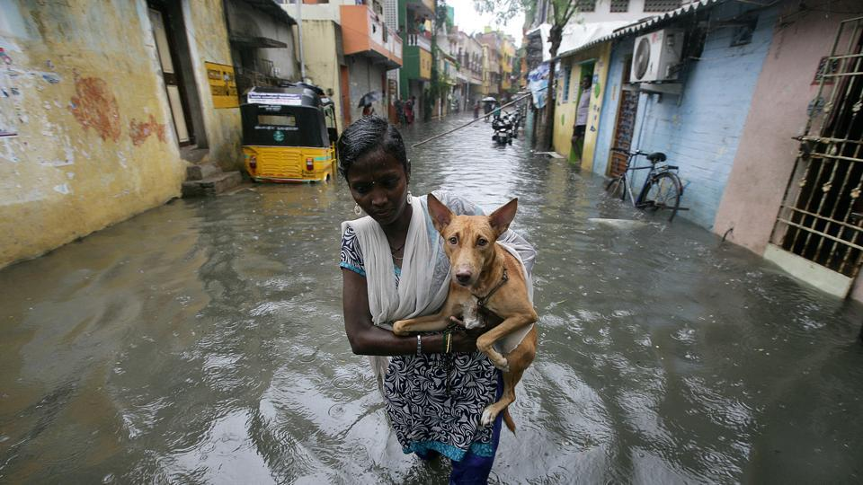 A woman carries a dog as she wades through a water-logged neighbourhood amid rain in Chennai.