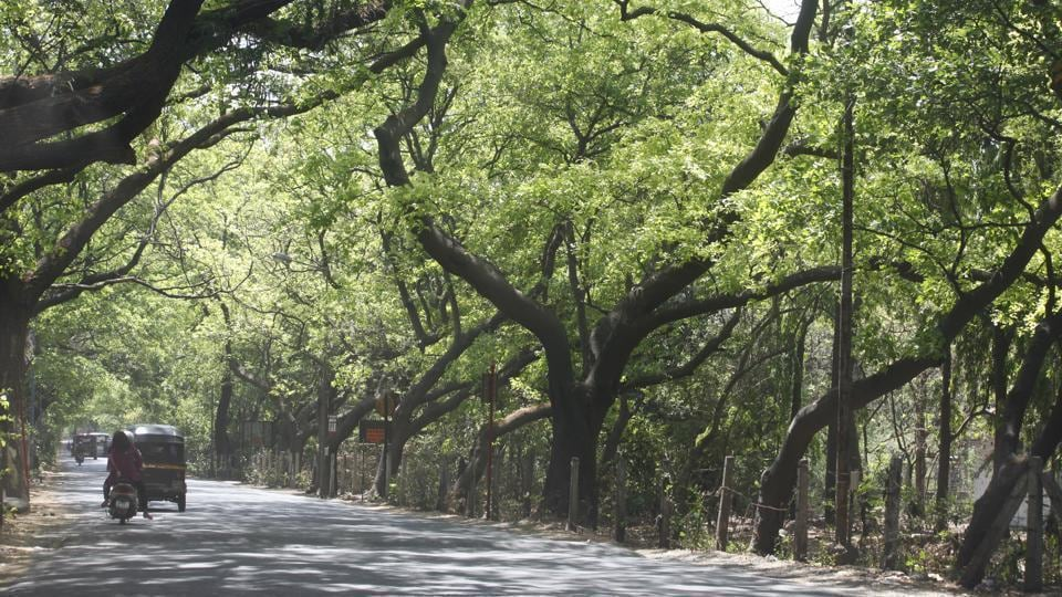 Aarey Milk Colony,Tree cutting,Mumbai News