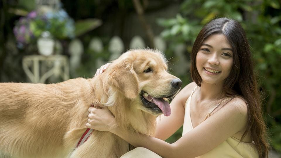 Study on dogs,Study on humans,Humans and dogs