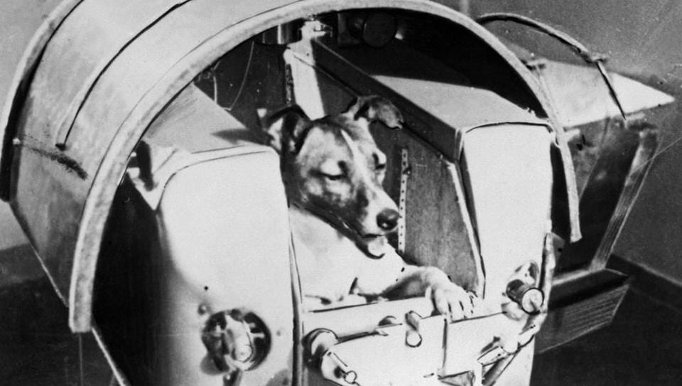 This photo taken from the Soviet daily Pravda and taken on November 13, 1957 shows the dog Laika, the first living creature ever sent in space, onboard Sputnik II.