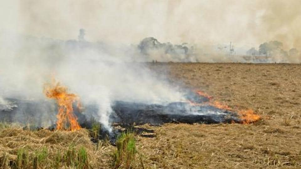 There are reports that farmers have set afire their fields after failing to save their crop from pests.