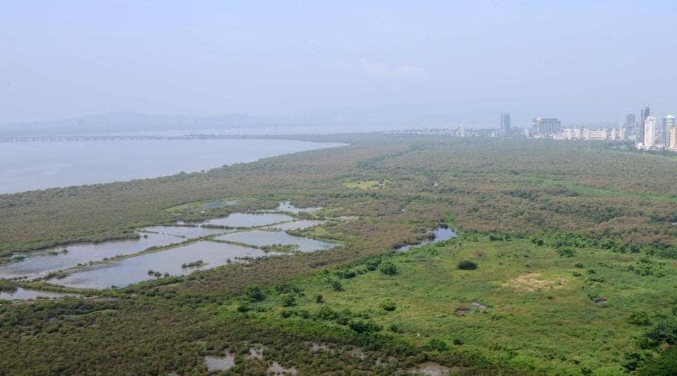 Publish draft maps of coastal areas first, the tribunal has instructed the Maharashtra Coastal Zone Management Authority.
