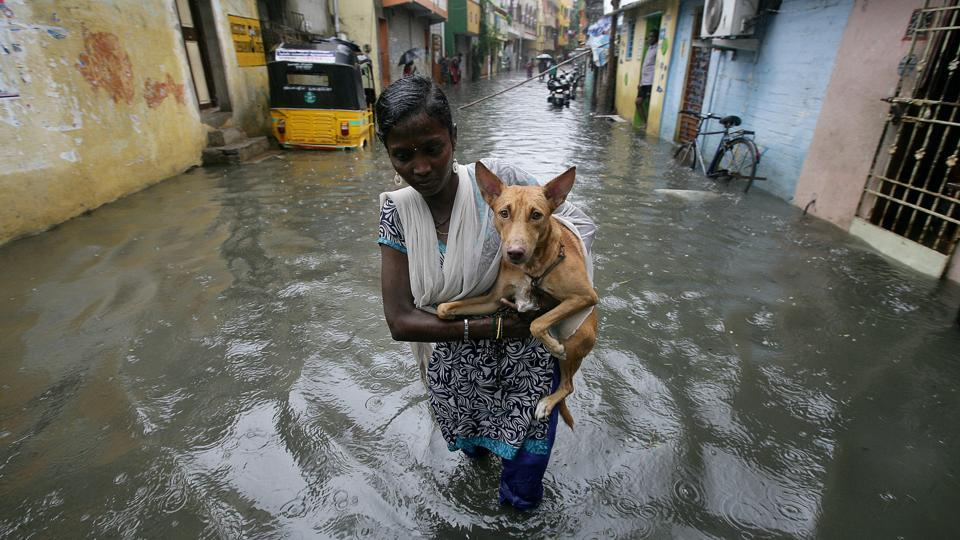 A woman carries a dog as she wades through a waterlogged neighbourhood in Chennai. Incessant rains poured nearly 74% of the northeast monsoon estimate in a span of five days bringing back memories of the 2015 deluge. (P. Ravikumar / REUTERS)