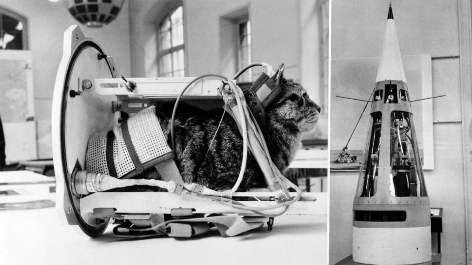 Two years later in October 1963, France became the first country to send a cat into space, named Felicette a black and white female cat found on the streets of Paris. She replaced Felix, who ran away on the eve of the departure. Felicette, launched aboard the Veronique AGI 47 sounding rocket. A recreation is seen during an exhibition at The Conservatoire national des arts et métiers in Paris.  (AFP)