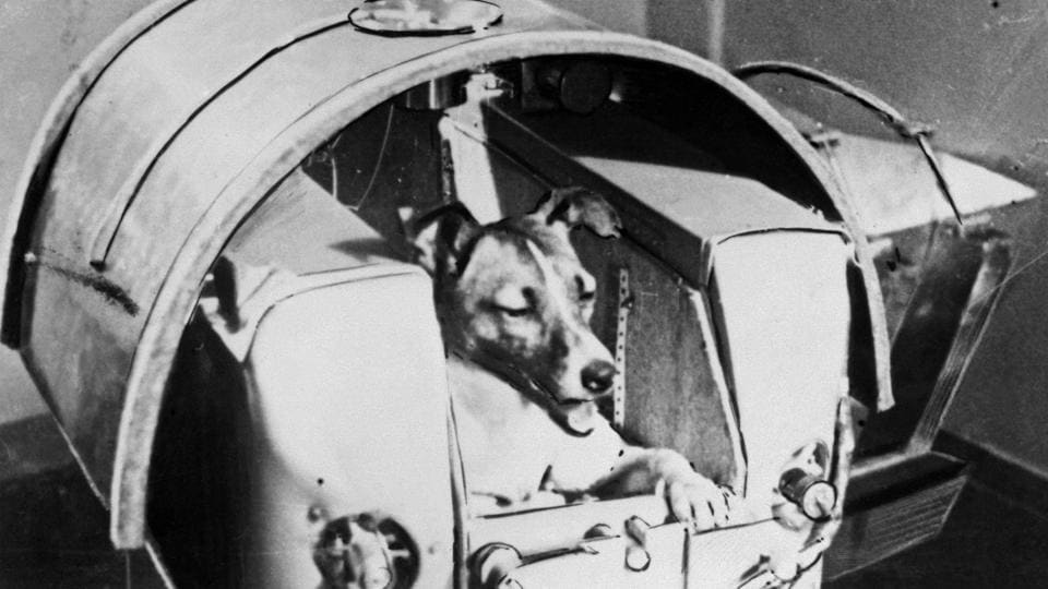 A photo from the Soviet daily Pravda shows Laika, on-board Sputnik II. The year was 1957 and the Soviet Union sealed one of its greatest scientific coups with the launch of the Sputnik satellite on October 4. While Moscow managed to send cosmonaut Yuri Gagarin, the first man in outer space in 1961, it was a dog called Laika who claimed the honour of the first living creature to orbit Earth, sixty years ago today. (TASS / AFP)