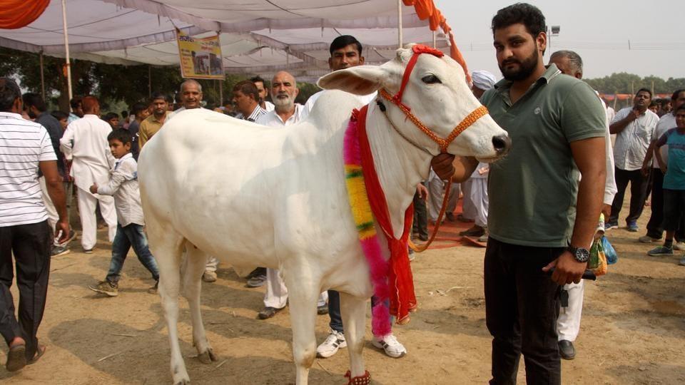 Junagadh,Gujarat,Bela