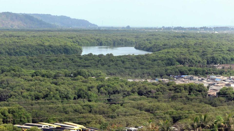 Mumbai news,mangroves,forest department