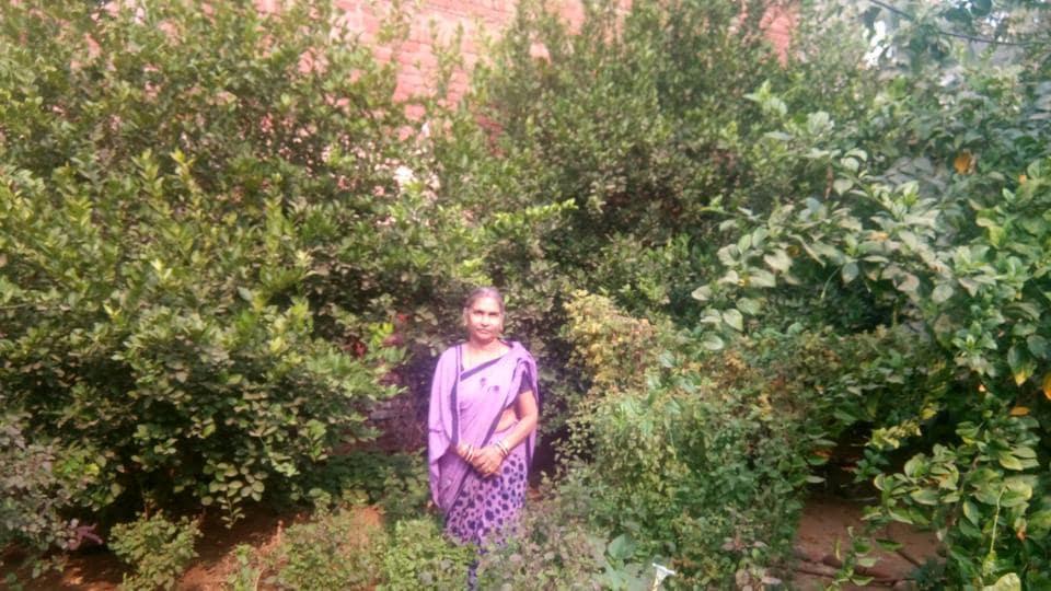 Rajasthan news,tulsi saplings,Pushpa Goyal