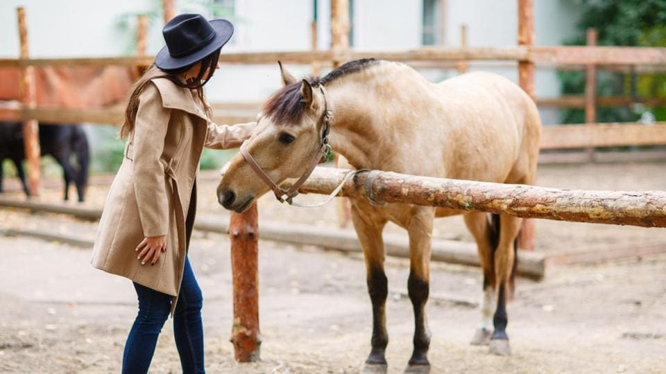 Can animals communicate or develop language skills?