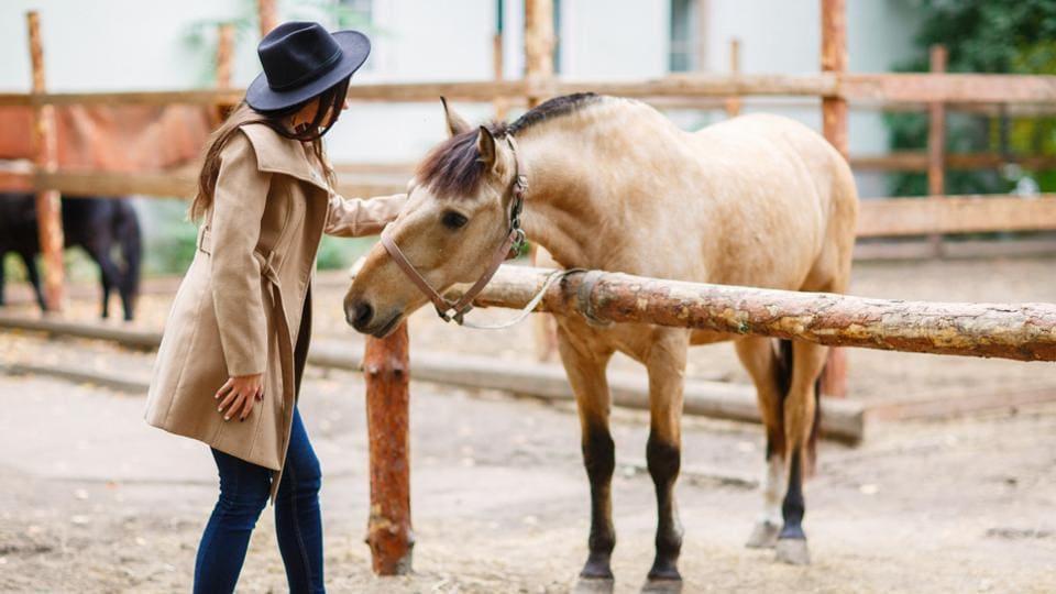 Horses,Horses intelligence,How smart are horses