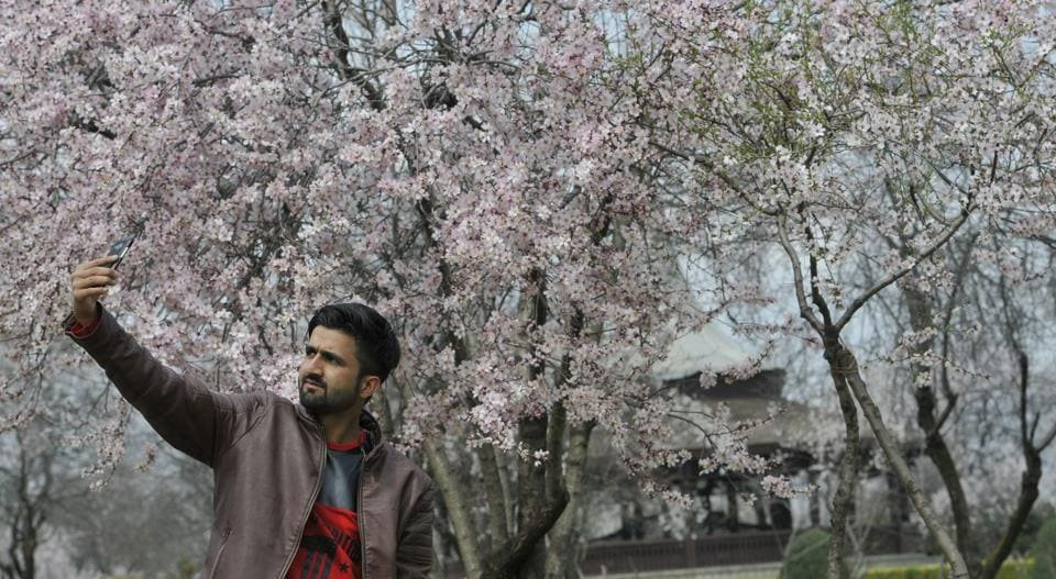 Families are picnicking at Badam Wari again, and youngsters are taking selfies, at the revived almond blossom park in old Srinagar.