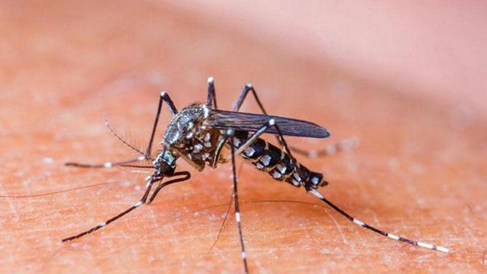 dengue,mosquito breeding sites,Mumbai civic body