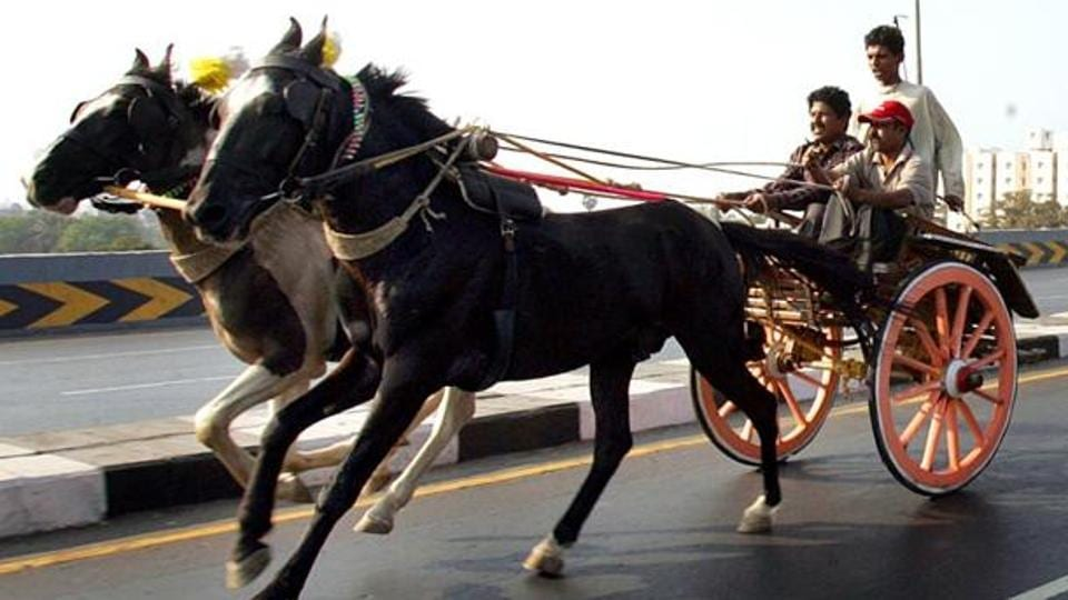 Horse carriages are banned at Nariman Point and Marine Drive, but not near Cooperage garden where the accident took place.