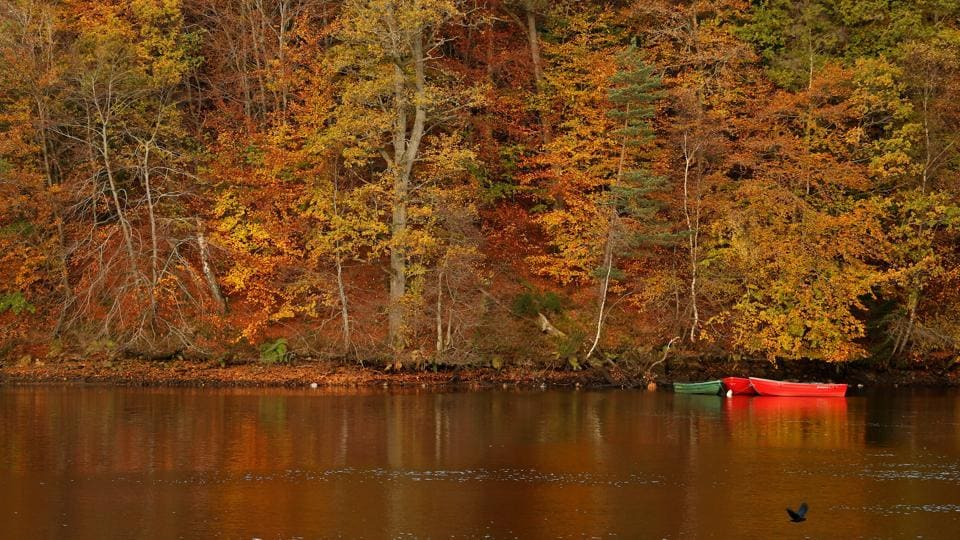 Autumnal foliage is reflected on Loch Faskally Pitlochry creates a tranquil scene in Scotland. (Russell Cheyne / REUTERS)