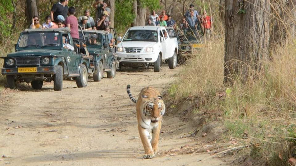 Rajaji will be third in the country after Sariska (Rajasthan) and Panna (MP), where tiger translocation was done.
