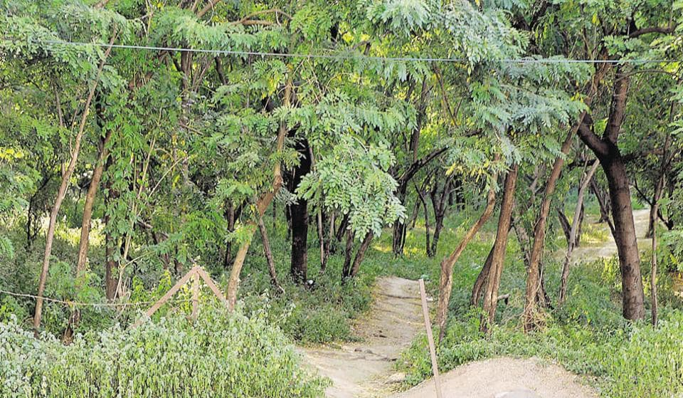 nibm,pune,reserved forest