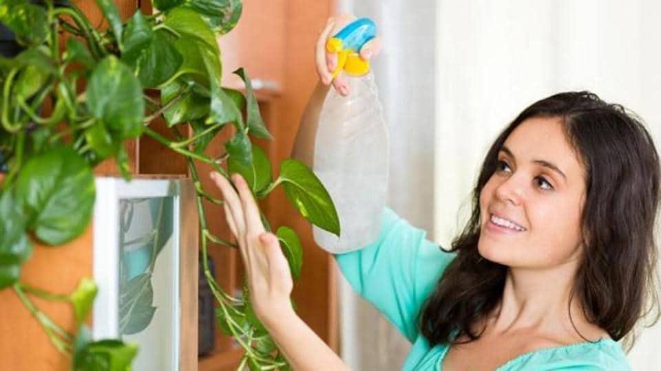 Indoor Garden,Gardening,House plants