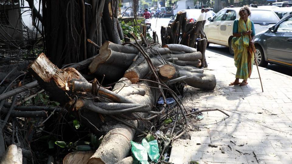 The citizens of Aundh, Baner, Shivajinagar sought justification from Shivajinagar MLA Vijay Kale about his remarks to uproot the stems of the 150-year-old banyan tree.
