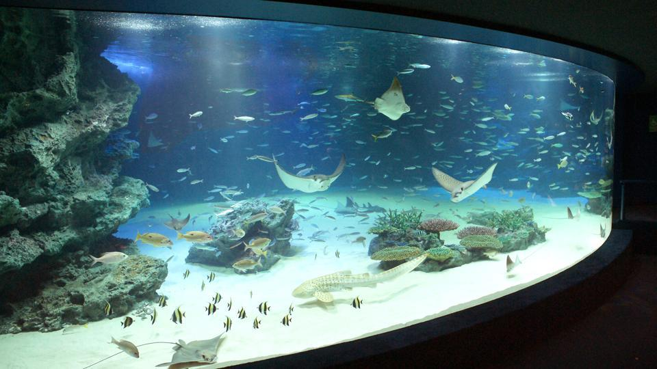 In this undated photo released by Sunshine City, stingrays and other fish swim in the 'Sunshine Lagoon' tank at Sunshine Aquarium in Tokyo. The popular Tokyo aquarium said it has resumed partial operations following the death of more than 94 percent of the fish in the largest tank.