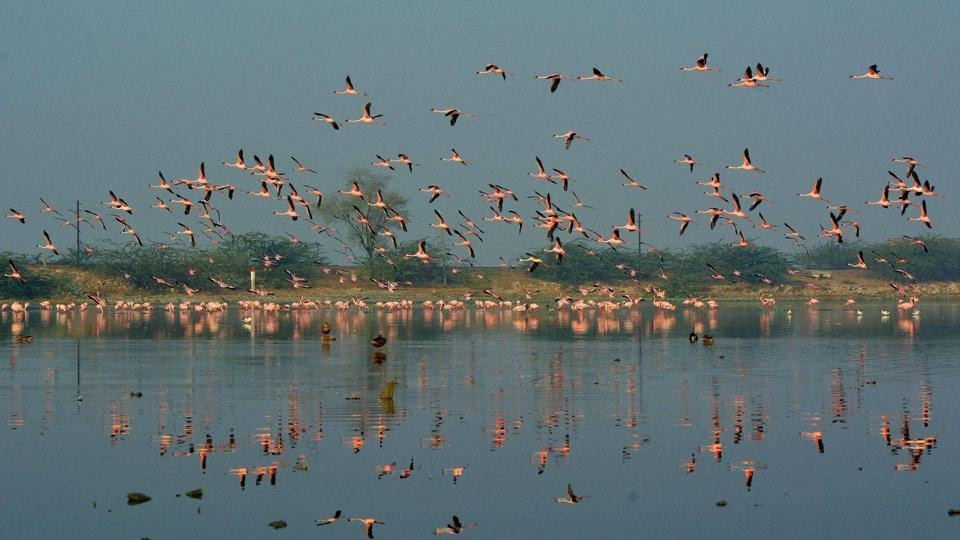 Ramgarh lake,Ramgarh dam,Supreme Court