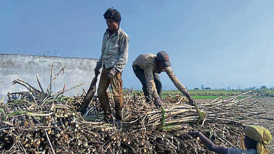 private sugar mills,crushing sugarcane,sugarcane growers