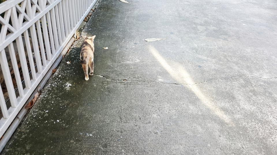 Cat,Japan,Stray cat
