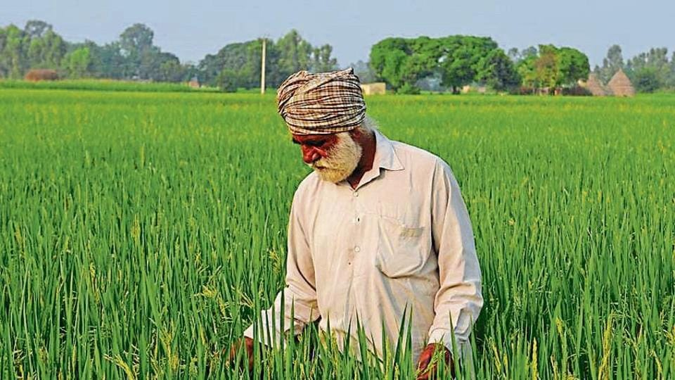 Despite fall in total area under paddy, production is expected to touch last year's 188 lakh tonnes.