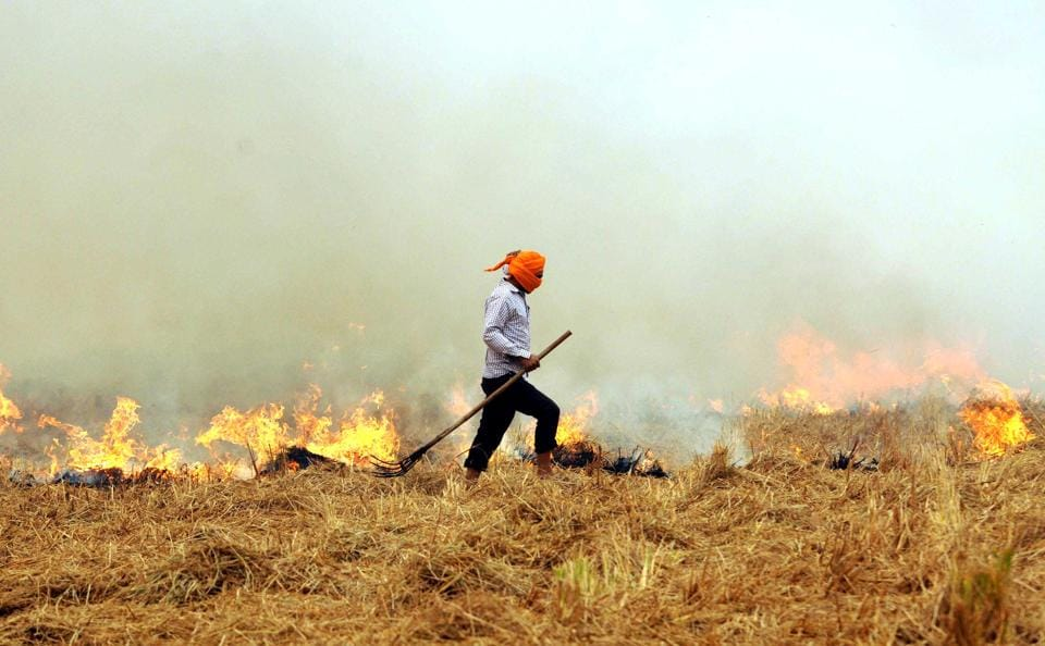 Farmers find it easy to dispose of paddy stubble by burning it.