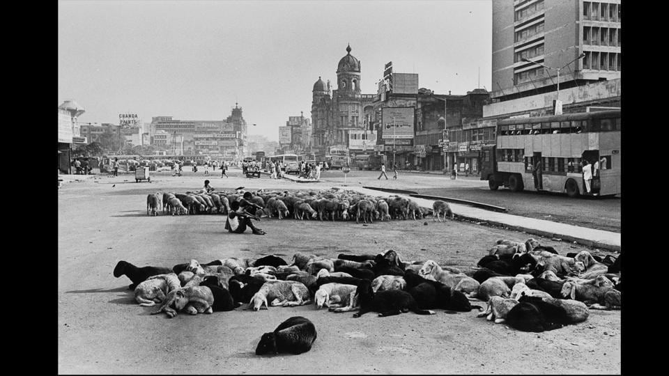 Easily India's most iconic, recognizable photographer, Rai's photograph, 'Sheep at Chowringhee Square, Kolkata, 1977' is an insight into the city during that decade. (© Raghu Rai)