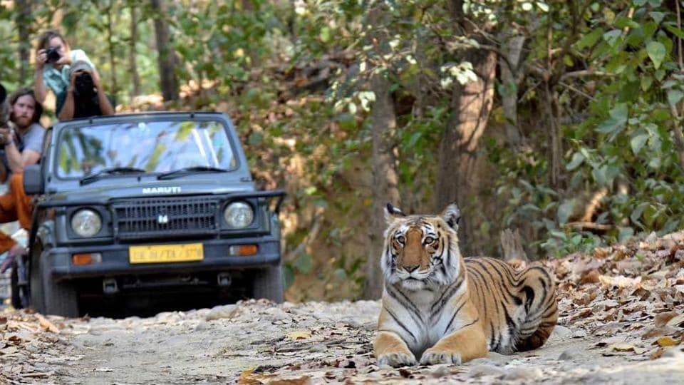 Bulk online booking for day visit and night stay at the Corbett National Park in Uttarakhand,  are being done by a number people believed to be operators, blocking regular tourists.