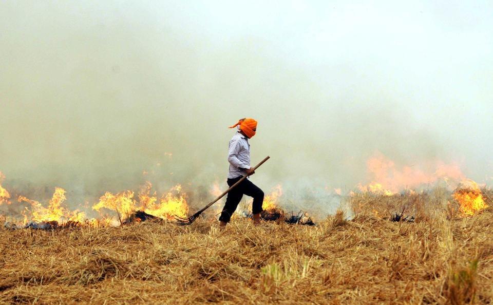 stubble burning blamed for delhi pollution why farmers