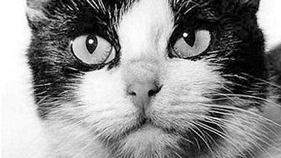 Felicette is the world's first and only cat to have travelled to space.
