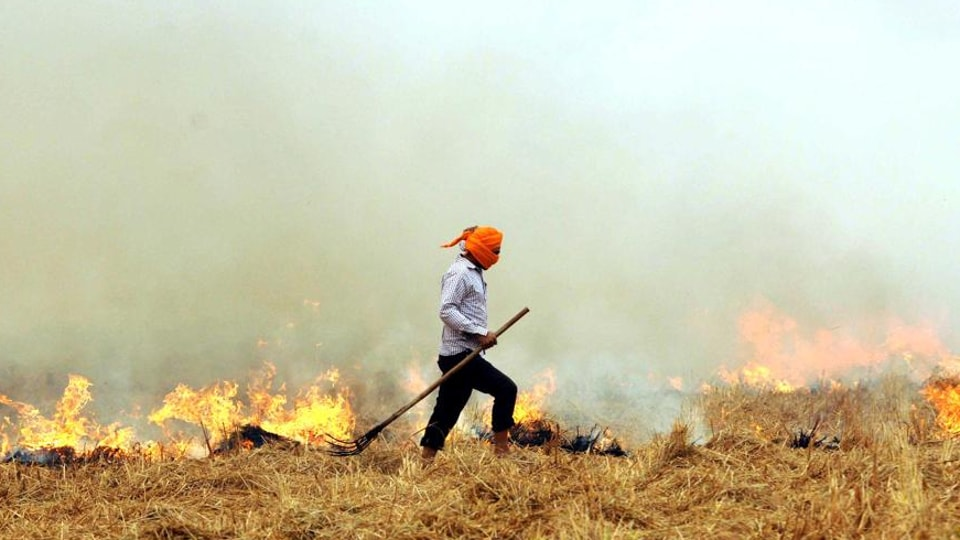 Stubble burning,pollution,Punjab farmers