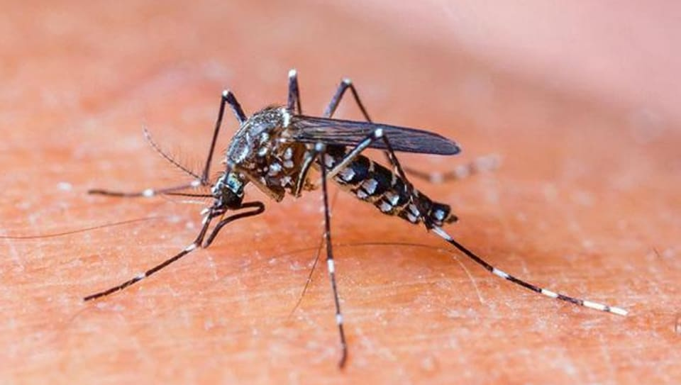Dengue,Chandigarh news,vector-borne diseases