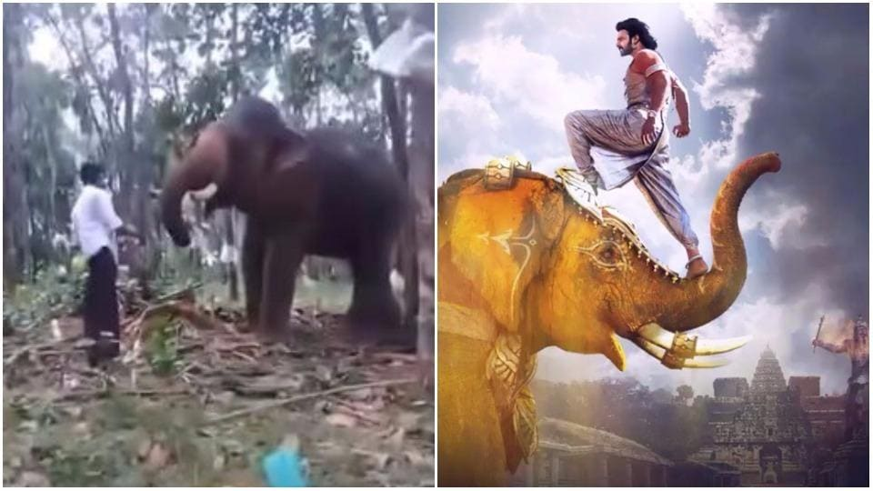 Kerala fan tries to imitate Prabhas to do the elephant sequence in Baahubali, gets injured.