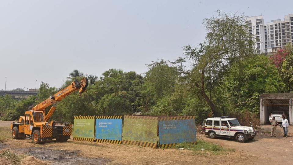 Metro-3,Transplanted trees,Bombay high court