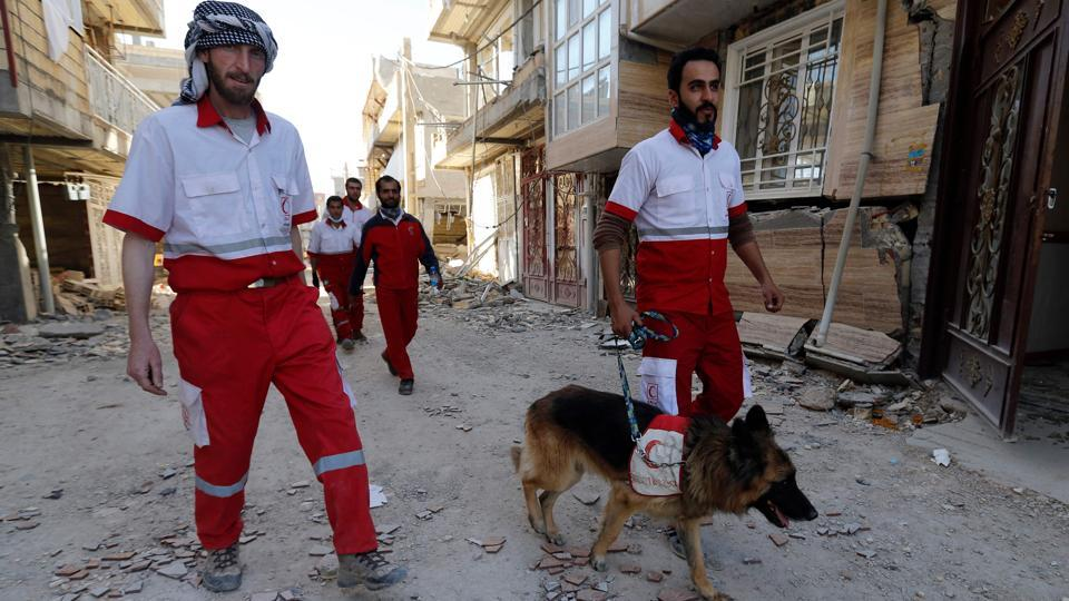 An Iranian civil defence K-9 unit walks down a street past damaged buildings during a search for survivors in a town near the border with Iraq. (Atta Kenare / AFP)
