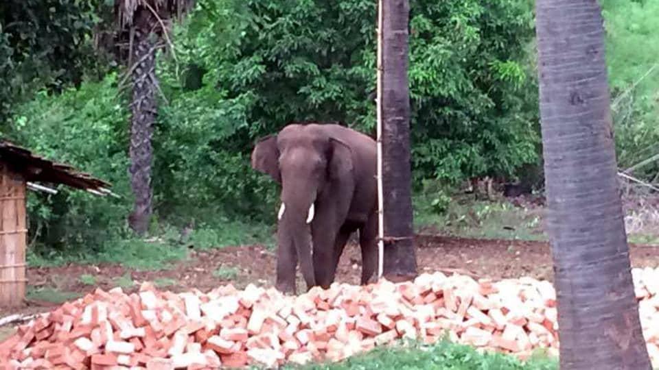 Farmer injured by Elephant near Sirumugai