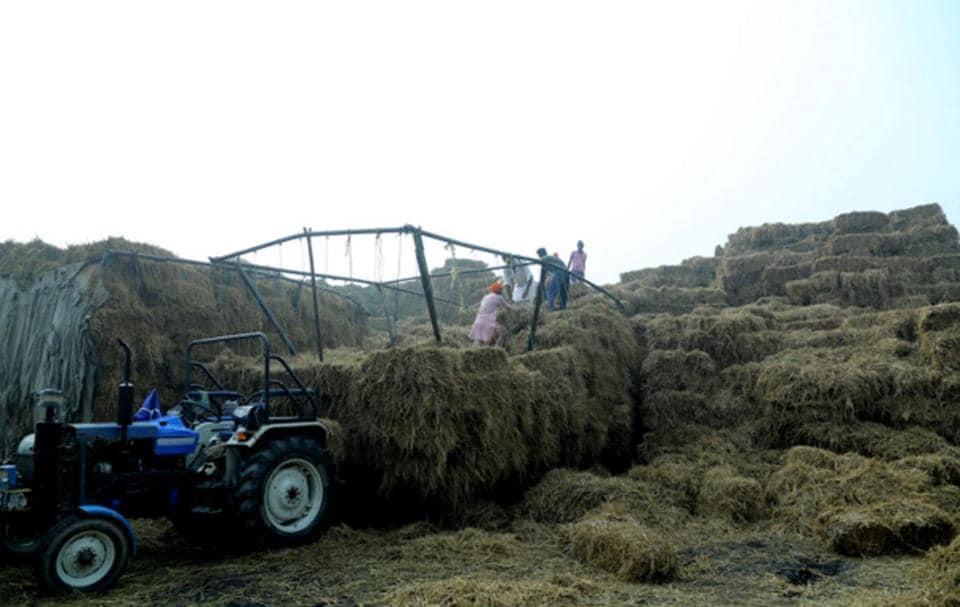 biomass plants in Punjab,biomass plants,Punab biomass