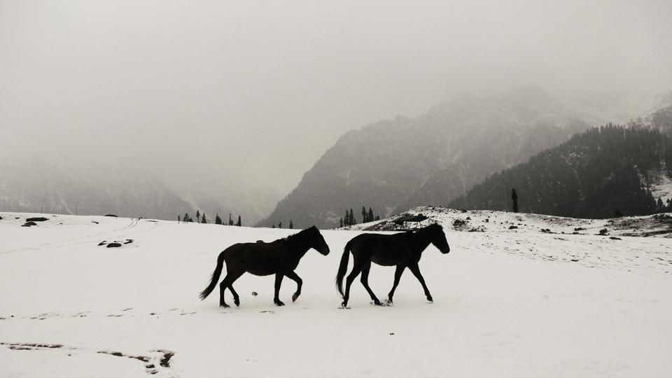 A pair of horses walk through a snow covered meadow at in Sonamarg, Jammu & Kashmir some 80 kms from Srinagar on November 15, 2017. The twin health resorts of Sonamarg and Naranag in upper reaches of Kangan in central Kashmir's Ganderbal district received the season's first snowfall in the wee hours on Wednesday. (Waseem Andrabi / HT Photo)