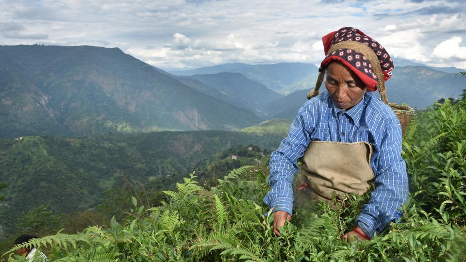 Nepal tea,Darjeeling unrest,Darjeeling tea party