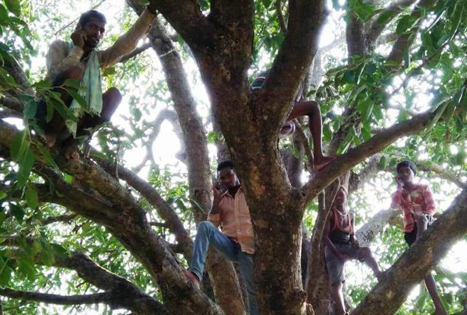mobile connectivity,cellphones,tribal villages