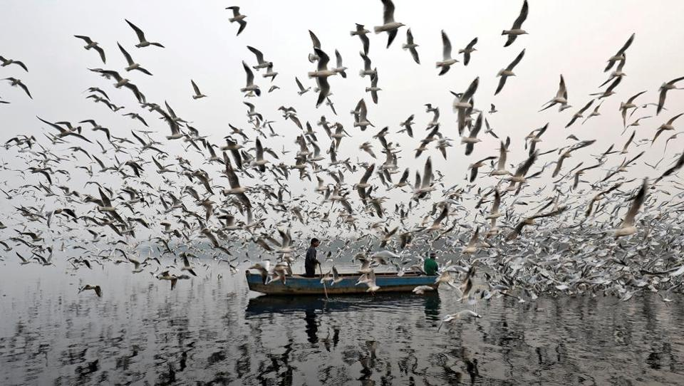 A man feed seagulls along the Yamuna river on a foggy morning on November 17, 2017 in New Delhi, India. (Saumya Khandelwal / REUTERS)