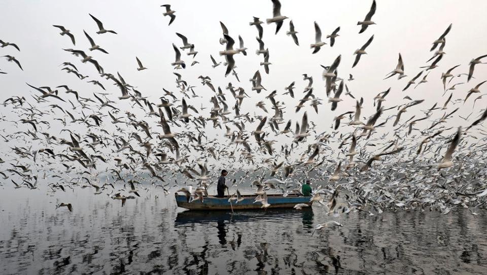 A man feed seagulls along the Yamuna river on a foggy morning on November 17, 2017 in New Delhi, India. (Saumya Khandelwal / REUTERS)