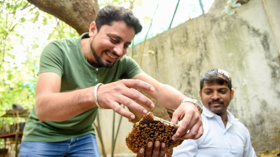 Amit Godse (L) and Pravin Patil relocating a bee hive to a shelter on Sunday.
